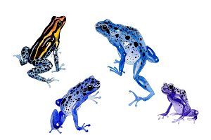 Blue frog PNG watercolor set