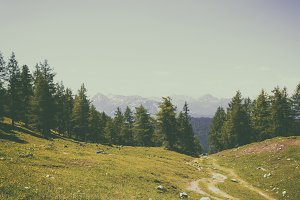 Green Forest and Away Alpine Rocks