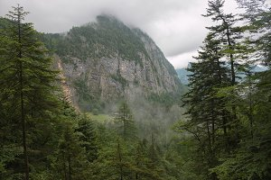 Forest and Alpine Mountains