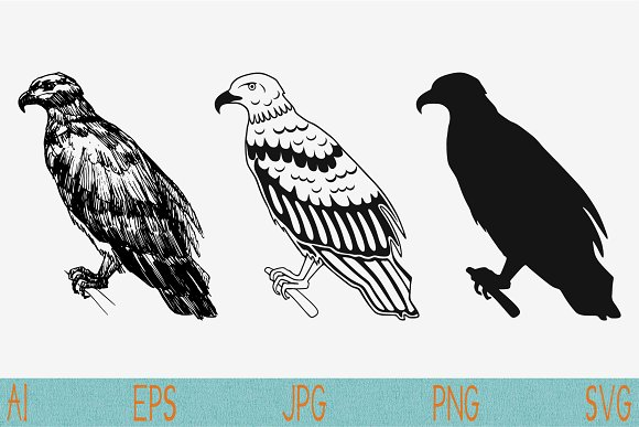 Eagle Set Vector Svg Png Eps