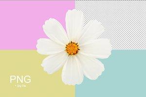 png white flower
