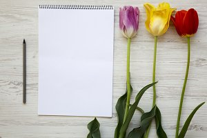 Colorful tulips with notebook