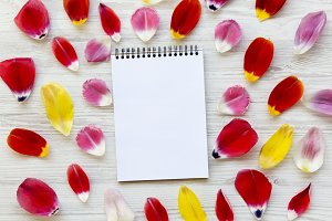 Notebook with colorful petals