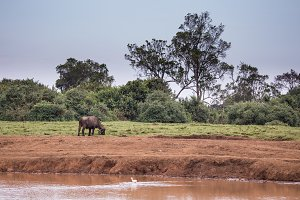 elephant in Aberdare National Park,
