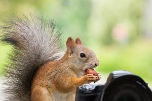 Squirrel and camera