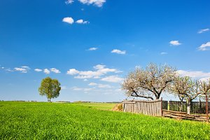 Countryside landscape during spring