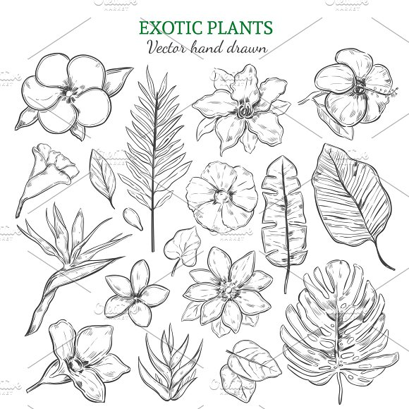 Hand Drawn Exotic Plants Set