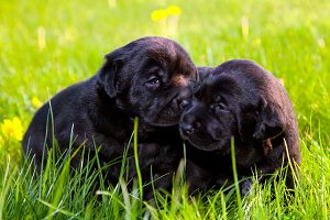 Two cute puppies on the grass