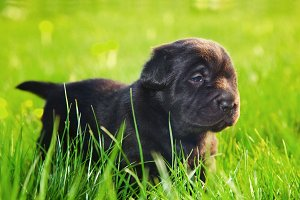 Cute puppy on the grass