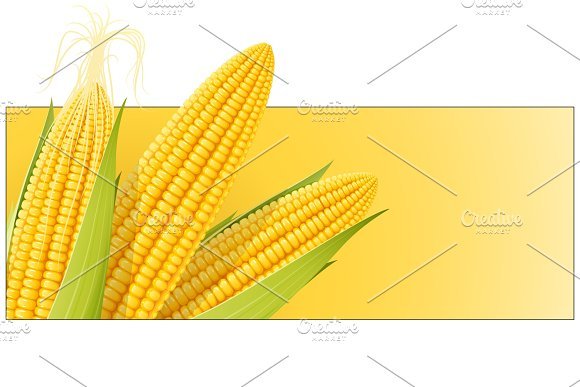 Corn Cob Organic Food
