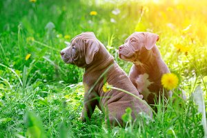 Cute little dogs sitting among yellow flowers in green grass in the park. Outdoors. Wallpaper.