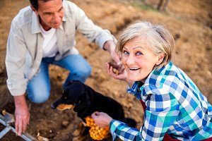 Close up of senior couple with dog planting onions