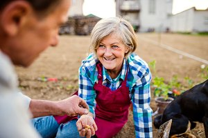 Senior couple planting onions in their garden into soil