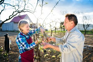 Senior couple pruning apple tree