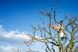 Senior man pruning tree branches against blue sky with clouds