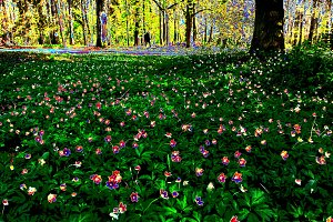 Forest and fabulous flowers.