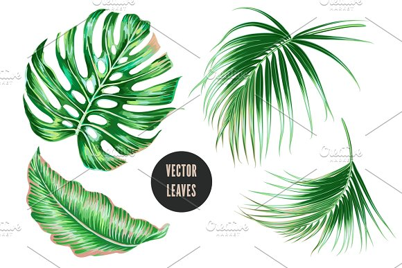 Tropical Jungle Leaves Illustrations