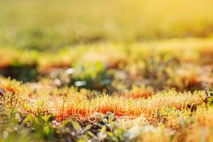 Close up of colorful sunny spring meadow, grass growing