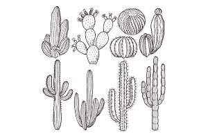 Illustrations of wild cactuses. Vector hand drawn pictures