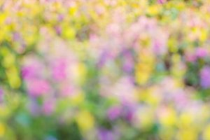 Blurred summer meadow with with colorful flowers. Sunny nature b
