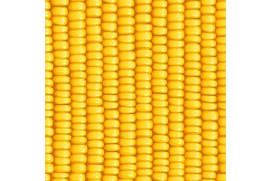 Corn cob. Organic food seamless pattern.