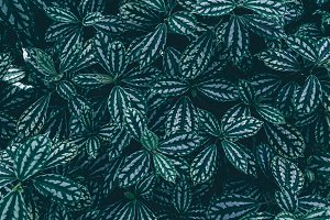 Dark exotic leaves texture