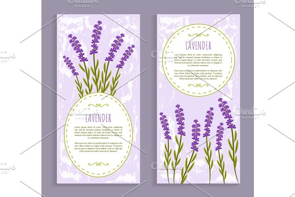 Lavender Collection Purple Vector Illustration