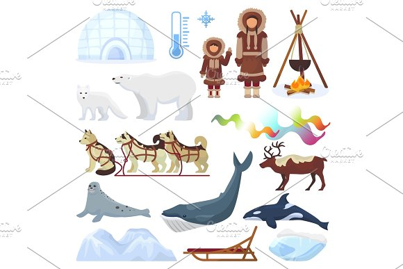 Arctic Vector Northern Borealis Norway And Husky Dog Sledding Sledge To Yurta In Snowy Winter Illustration Polaris Set Of North Ethnic Characters Animals And Polar Bear Isolated On White Background