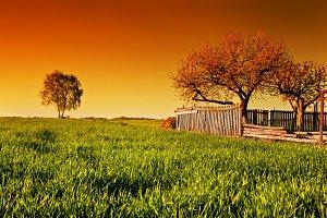 Spring landscape during sunset