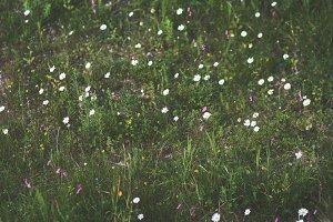 In a field.