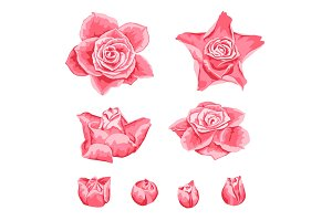 Set of decorative pink roses.