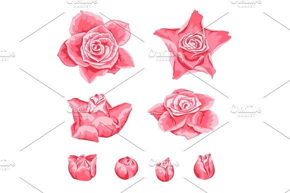 Set of decorative pink roses.