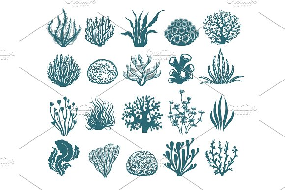 Seaweeds And Coral Silhouettes