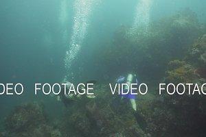 Scuba Divers underwater. Philippines, Mindoro.