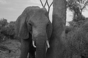 elephants in Samburu National Park,