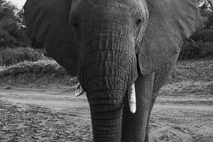 elephants in Samburu National Park,