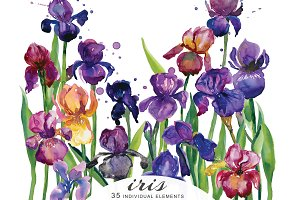 Watercolor Iris Flowers Clipart