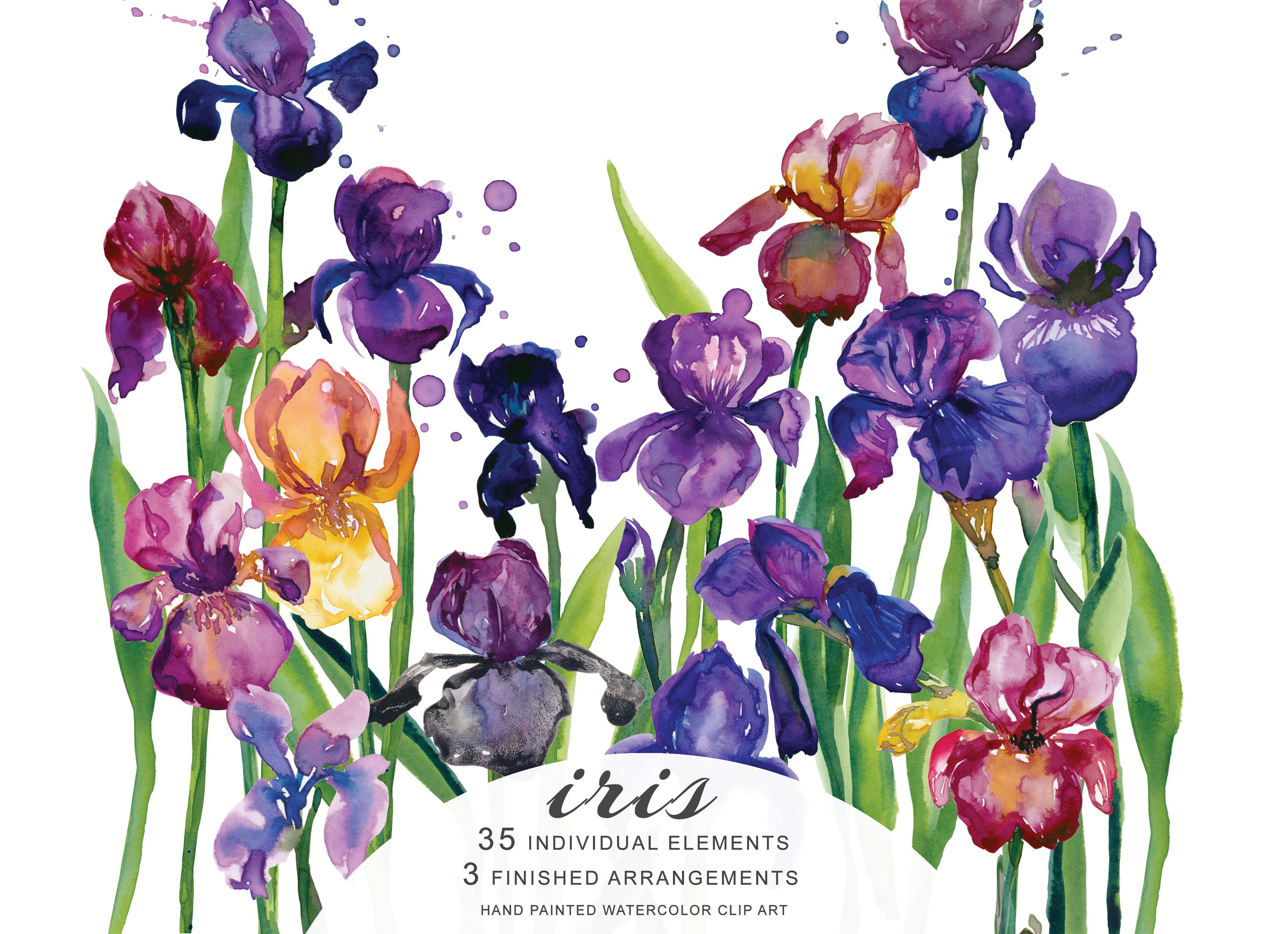Watercolor Iris Flowers Clipart Illustrations Creative Market