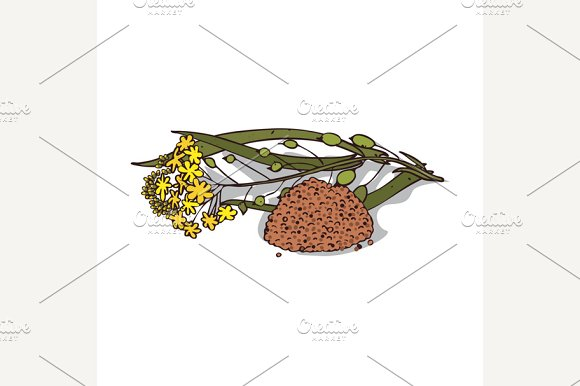 Isolated Clipart Camelina Sativa