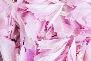 Peony petals