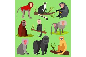 Vector monkeys apes breed rare animal set of cartoon macaque nature primate chimpanzee and orangutan primate monkeys apes characters. Wild zoo jungle animals isolated