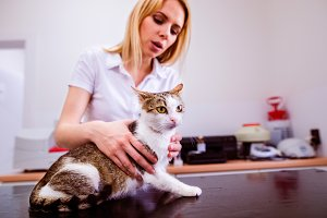 Young blond veterinarian holding little sick cat. Veterinary cli