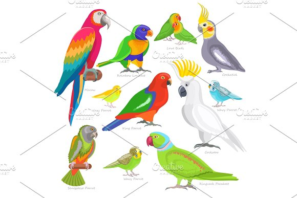 Parrot Vector Parrotry Character And Tropical Bird Or Cartoon Exotic Macaw In Tropics Illustration Set Of Colorful Birdie Isolated On White Background