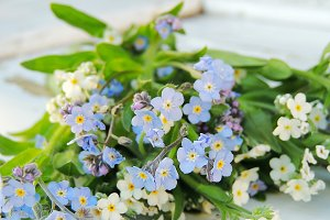Forget me not flowers.