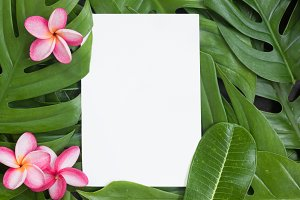Tropical top view summer botanical concept still life white fram
