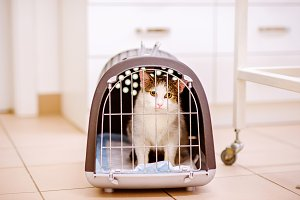 Close up of a little cat in cage
