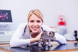 Veterinarian with stethoscope holding little sore cat. Veterinar