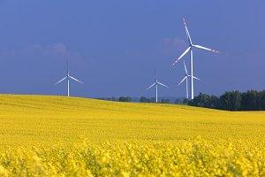 Wind turbines farm on the rape field