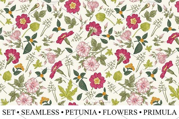 Set Seamless Flowers Petunia