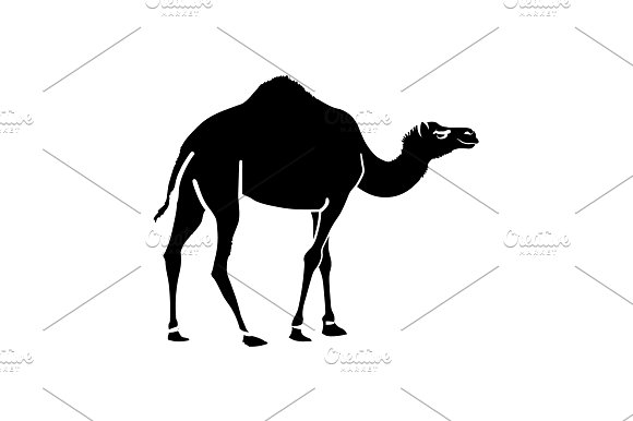 Camel Vector Icon Black On White